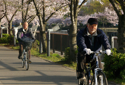 Two elderly riding bicycle in the morning.  Osaka, Japan